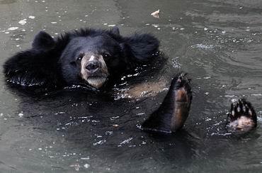 resize-of-cool-bear.jpg