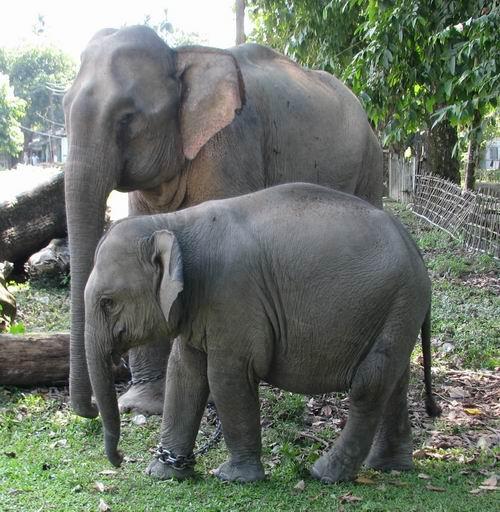 Visnupriya and Mum