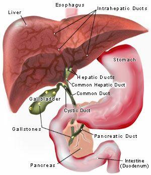 gallbladder.jpg